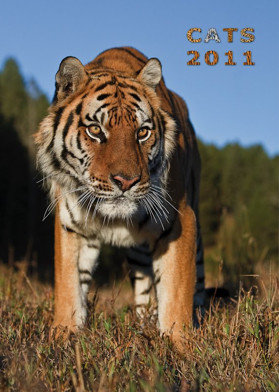 With the Eye of the Tiger: CATS 2011 – Der Kalender zum ...